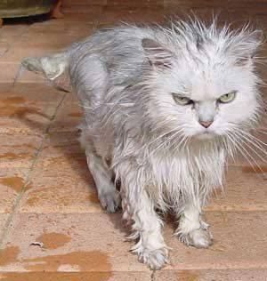 housecat